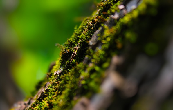Picture summer, macro, glare, tree, moss, bokeh