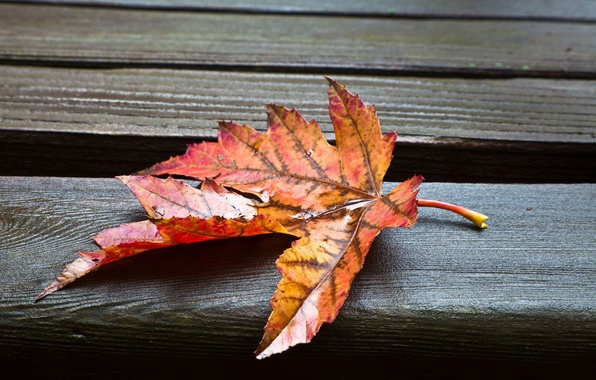 Picture leaves, macro, wet, background, Wallpaper, leaf, wallpaper, leaf, widescreen, background, full screen, HD wallpapers, widescreen