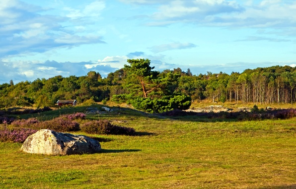 Picture field, forest, the sky, grass, trees, stone, house, Sweden, Vastra Gotaland County