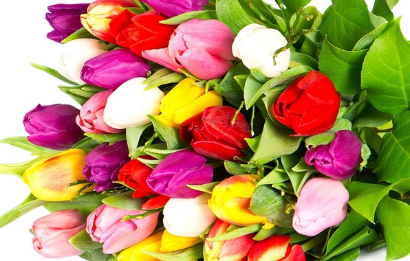 Picture flowers, bright, beauty, bouquet, petals, purple, tulips, red, red, pink, white, white, colorful, yellow, pink, …