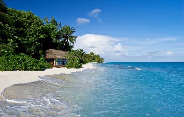 Picture sand, sea, tropics, palm trees, shore, hut, The Maldives, Kuramathi