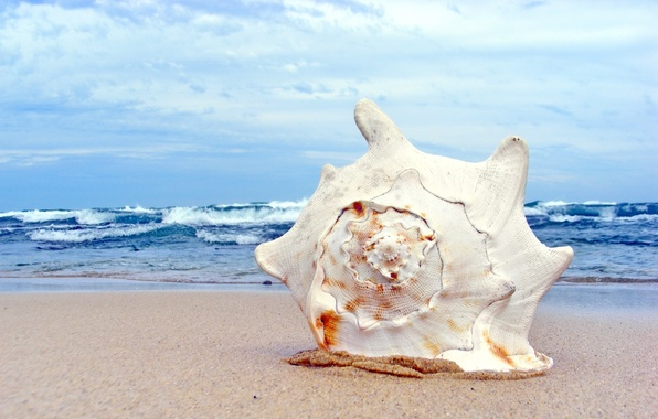 Picture sand, sea, wave, beach, summer, the sky, macro, shore, sink, shell