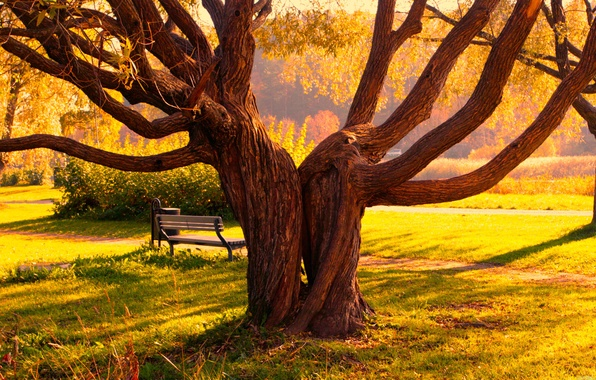 Picture autumn, trees, bench, Park, tree, trail, Landscape, path, bench, trova