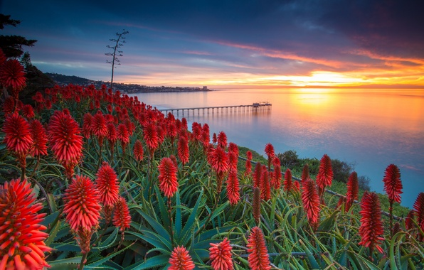 Picture sea, the sky, clouds, sunset, flowers, pier, USA, usa, aloe, san diego, agave