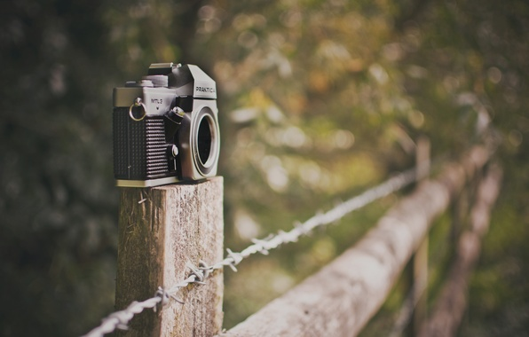 Picture greens, nature, background, widescreen, Wallpaper, mood, the fence, blur, camera, the fence, the camera, wallpaper, …
