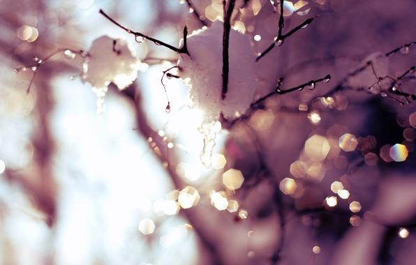 Picture the sky, the sun, drops, light, snow, trees, glare, sprig, spring, thaw, time, drops, warm …