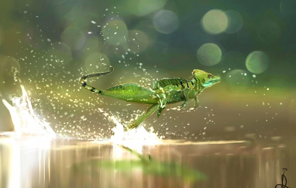 Picture water, flowers, squirt, nature, Palma, Wallpaper, speed, beauty, lizard, art, running, flight, art, art, reptile, ...