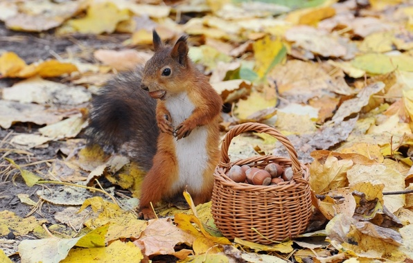 Picture autumn, protein, nuts, basket