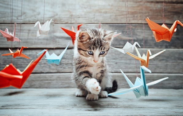 Picture cat, mustache, the game, paws, blur, muzzle, tail, different, origami, cat, Tomcat, the study, paper, …