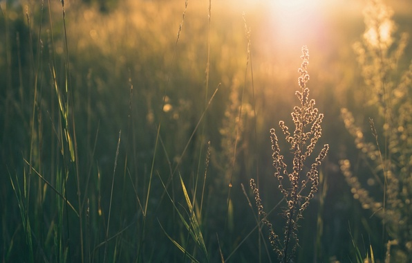 Picture greens, grass, leaves, the sun, flowers, nature, background, widescreen, Wallpaper, wallpaper, leaves, widescreen, background, leaves, …