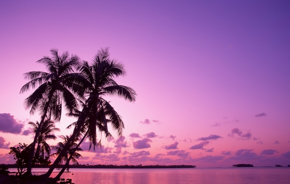 Picture sunrise, vacation, Palm trees