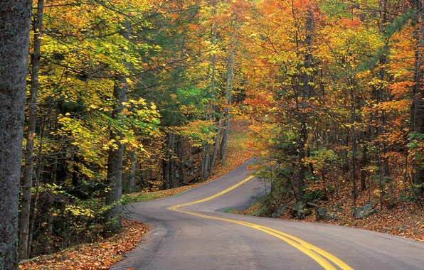 Picture road, forest, leaves, trees, track, Autumn, turn, slide