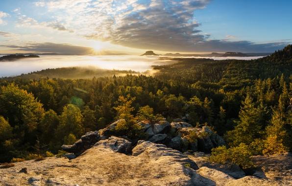 Picture forest, mountains, fog, sunrise, dawn, morning, Germany, panorama, Germany, Saxony, Saxony, Saxon Switzerland, Saxon Switzerland, …