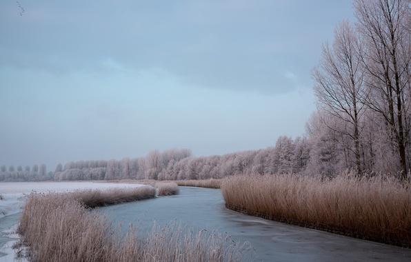 Picture winter, nature, river