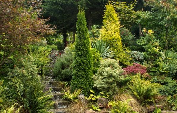 Picture greens, trees, Park, garden, ladder, UK, steps, the bushes, Mount Pleasant gardens