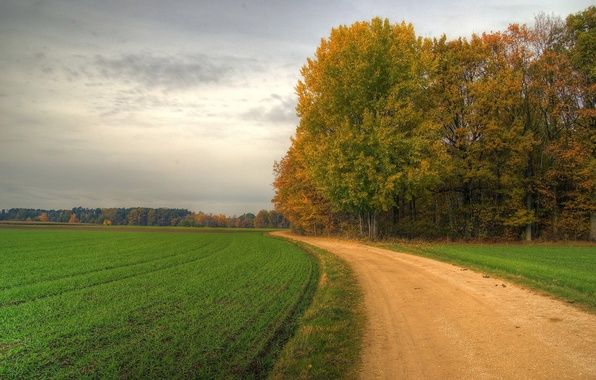 Picture road, field, trees, turn, 152