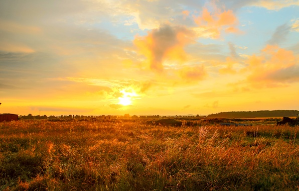 Picture field, clouds, sunrise, horizon, yellow sky
