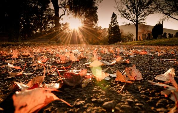 Picture road, autumn, the sun, macro, rays, light, glare, foliage