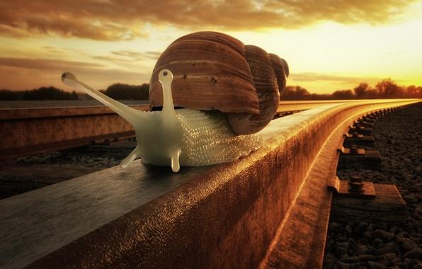 Picture macro, sunset, snail, railroad
