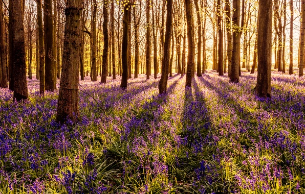 Picture forest, grass, the sun, trees, flowers, spring, bells
