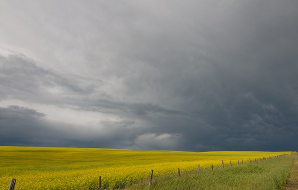 Picture the storm, field, the fence, farm, gray clouds