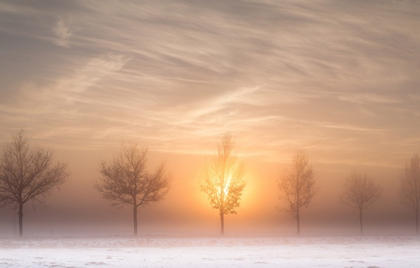 Picture winter, road, the sun, trees, fog, morning
