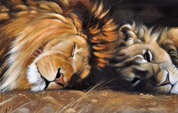 Picture animals, cats, sleep, predators, picture, Leo, art, mane, lioness, wild, Pollyanna Pickering
