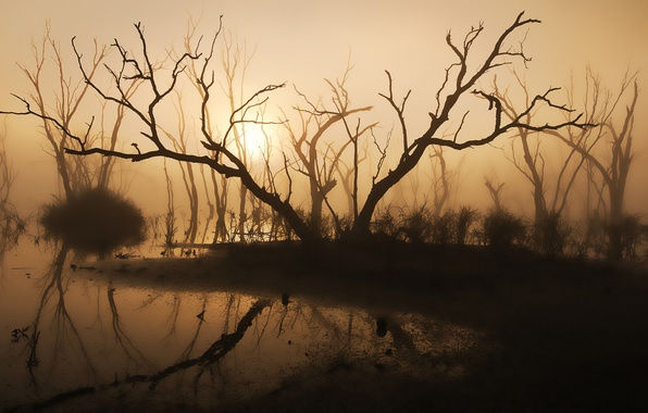 Picture trees, fog, lake, morning, silhouette, sunlight, driftwood