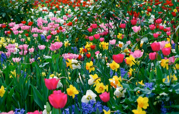 Picture field, grass, leaves, petals, meadow, tulips