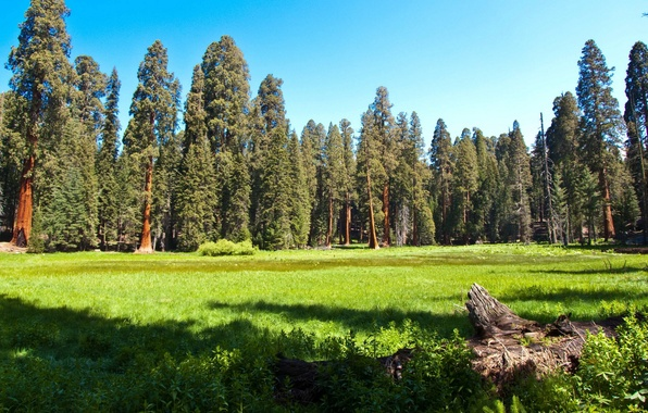 Picture forest, grass, nature, Park, photo, meadow, CA, USA, sequoia