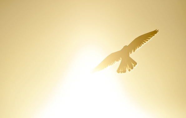 Picture the sky, freedom, the sun, flight, landscape, yellow, background, bird, mood, wings, silhouette, bird, widescreen, …