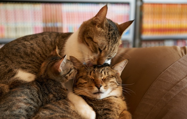Picture cats, comfort, house