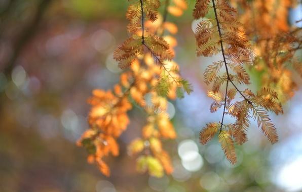 Picture macro, glare, tree, Autumn, blur, needles, twigs
