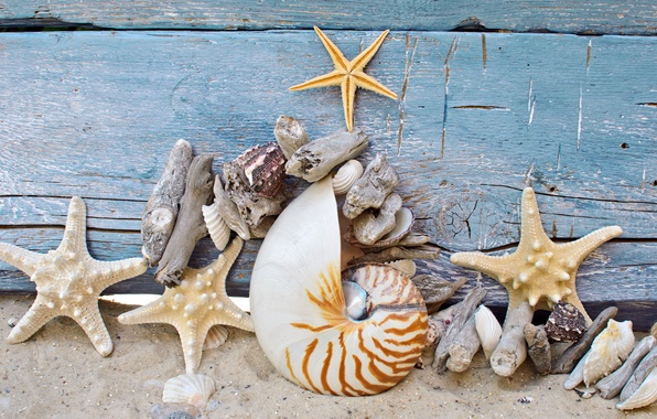 Picture sand, beach, tree, shell, wood, sand, marine, stones, starfish, starfish, seashells