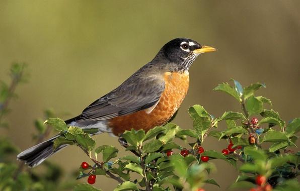 Picture bird, Sparrow, bird, on the branch, Dada Bob