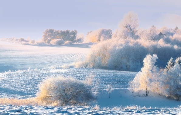 Picture winter, frost, forest, snow, trees, morning