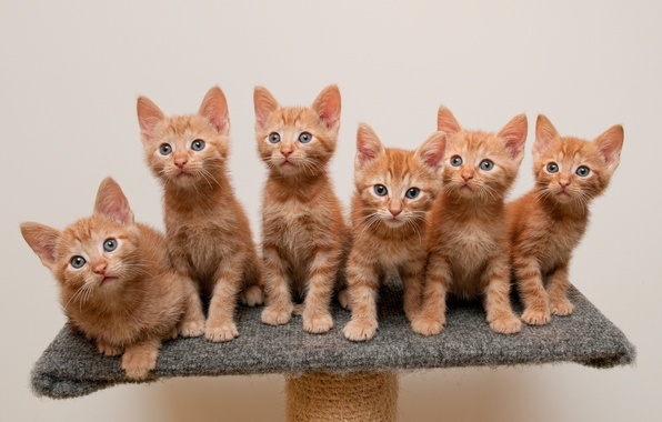 Picture kittens, red, stand