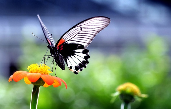 Picture flower, nature, butterfly, plant, wings, insect, moth