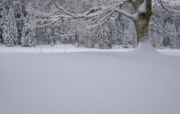 Picture winter, forest, snow, trees, Switzerland, the snow, Switzerland, Swiss Jura
