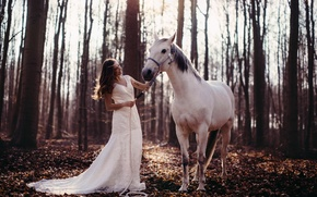 Picture forest, girl, horse