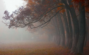 Picture autumn, trees, nature, fog, morning, October