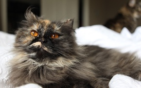 Picture cat, cat, pussy