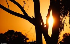 Picture black, trees, yellow, sunset, sun, sun down