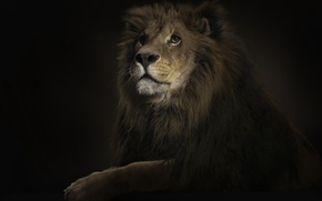 Picture Leo, 150, king, lighting