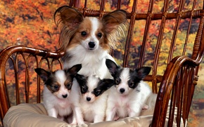Wallpaper family photo., Mom, puppies
