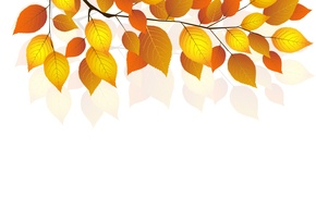 Picture autumn, leaves, sprig, white background, autumn, leaves, white background, twigs