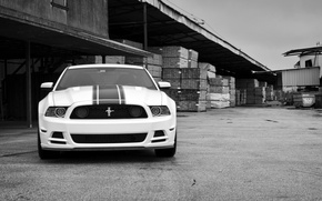Picture white, mustang, white, ford, the front, Ford Mustang, black and white photo, boss 302, boss ...