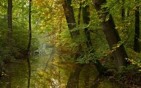 Picture autumn, forest, river, calm