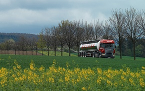 Picture grass, trees, track, green, truck, tractor, tank, backer, Scania R 380. field
