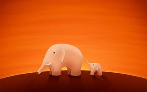 Picture elephant, trunk, elephant